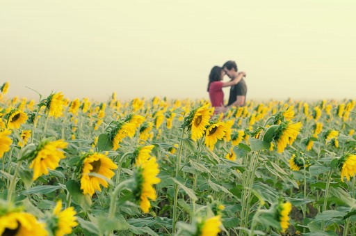 DSC 4544a 512x339 Engagement Photos :: Sunflower Field & Cabin in the Woods