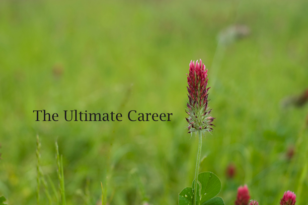 the-ultimate-career
