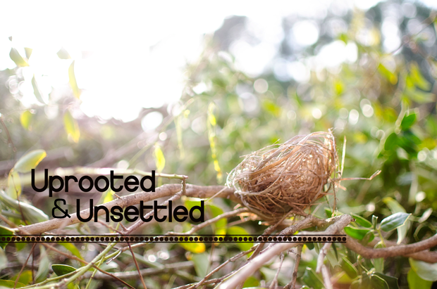 uprooted-and-unsettled