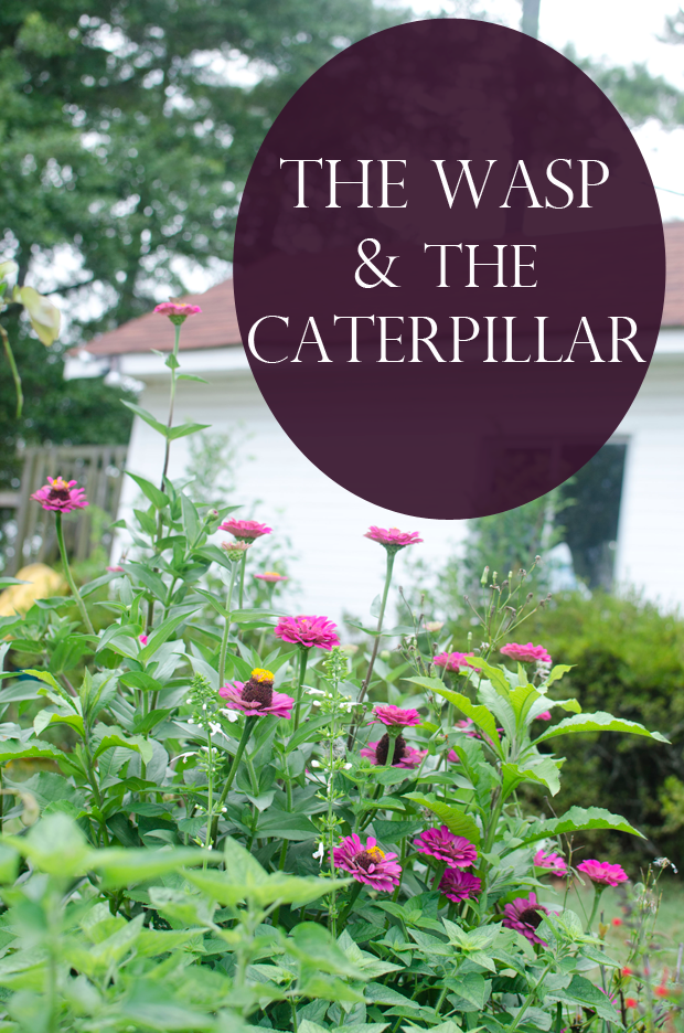 wasp and the caterpillar